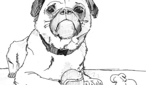 How to draw a dog easy so cute step by step for Beginners