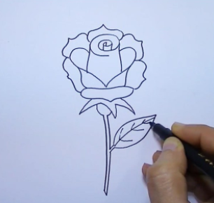 How to draw a Rose Easy with Pencil Step by Step